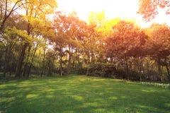 Лужайка парка Стоковое Изображение