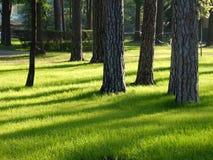 Лужайка парка Стоковое Изображение RF