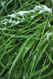 Лужайка покрытая с снегом Стоковые Изображения