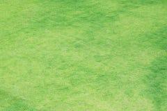 Лужайка полей для гольфа зеленая стоковые изображения rf
