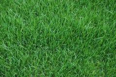 Лужайка, предпосылка Стоковая Фотография