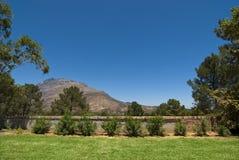 лужайка сада большая Стоковые Фотографии RF