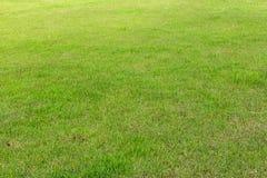 Лужайка, сад Стоковые Фотографии RF