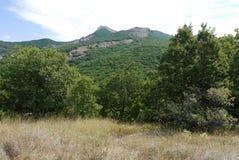 Лужайка сухой травы на ноге скалистой горы покрытой с зелеными плантациями дерева Стоковые Изображения RF
