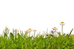 Лужайка с маргаритками и фиолетами Стоковые Изображения RF
