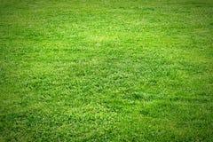 Лужайка текстуры зеленая Стоковая Фотография RF