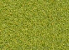 Лужайка текстуры предпосылки травы поля для гольфа Стоковое Изображение