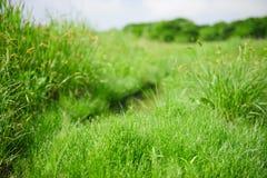 Лужайка травы утра Стоковые Фотографии RF