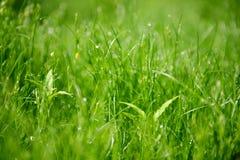 Лужайка травы утра Стоковые Изображения RF