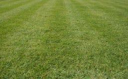 лужайка травы Стоковые Изображения RF