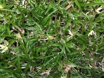 Лужайка травы LM стоковое изображение