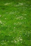 лужайка цветка стоковое изображение rf
