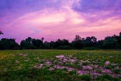 Лужайка ширины с небом после захода солнца стоковое изображение rf