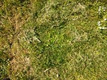 Лужайка Стоковое Изображение
