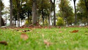 Лужайка Стоковое Фото