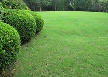 Лужайка Стоковые Изображения