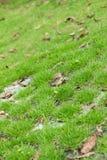 Лужайка Стоковая Фотография