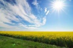 лужайка Стоковые Изображения RF