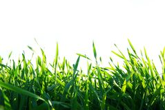 лужайка Стоковые Фотографии RF