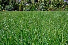 лужайка Стоковое Изображение RF