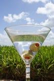 лужайка martini Стоковые Фотографии RF