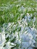 Лужайка Snowy Стоковые Изображения RF