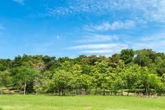 Лужайки и деревья в парке Стоковое Изображение