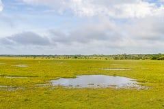 Лужицы и коровы на ферме Стоковое Изображение