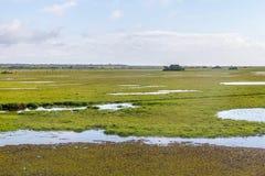 Лужицы и коровы на ферме Стоковые Фото