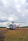 лужок вертолета одичалый Стоковая Фотография RF