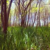 Лужок весной Стоковые Изображения