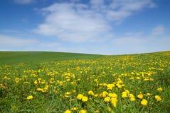 Лужок весны Стоковое Изображение RF