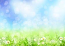 Лужок весны иллюстрация штока