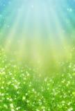 Лужок весны Стоковое Фото