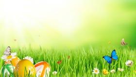 Лужок весны стоковое изображение