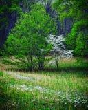 Лужок весны Стоковые Фотографии RF