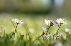 Лужок весны стоковая фотография