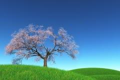 лужок вишни цветения 3d сиротливый представляет вал Стоковое фото RF