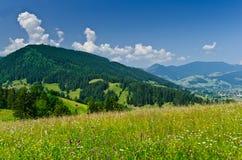 Лужок в горах Стоковое Фото