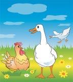 лужок гусыни цыпленка Стоковое Изображение RF