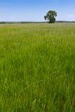 лужок естественный Стоковое фото RF