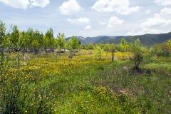 Лужок желтых Wildflowers Стоковая Фотография