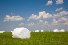 лужок зеленого сена ballots лежа Стоковая Фотография