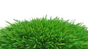 лужок зеленого цвета травы Стоковые Изображения RF