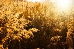 лужок золота Стоковое Изображение
