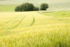 Лужок и дерево Стоковые Изображения RF