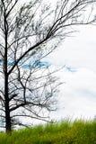 Лужок и дерево Стоковое Изображение RF