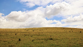 Лужок и небо Стоковая Фотография
