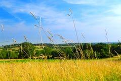 лужок ландшафта страны Стоковое фото RF