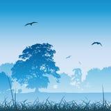 лужок ландшафта Стоковая Фотография